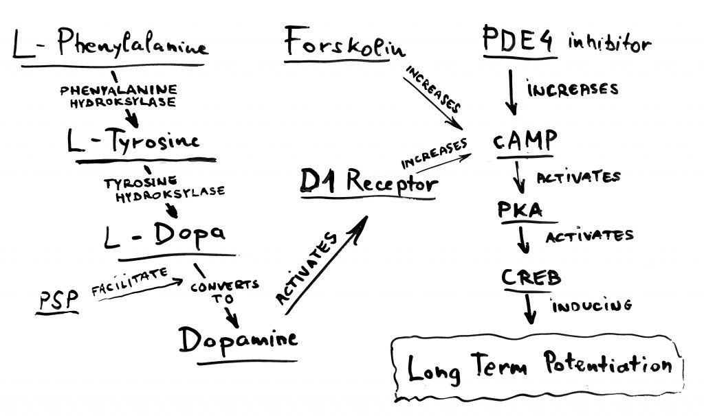 long-term potentiation CILTEP ingredients graphic