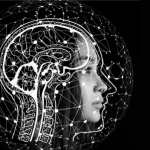 Picture of human brain and nootropic definition