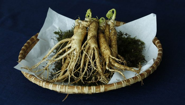 raw Ginseng roots on a plate