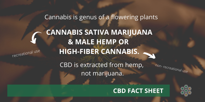 Cannabis sativa marijuana & male hemp - cheat sheet