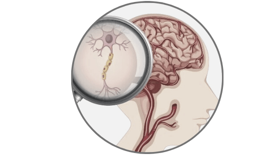 neuron close up; what are nootropics?