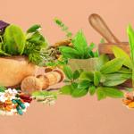 best natural nootropics ingredients