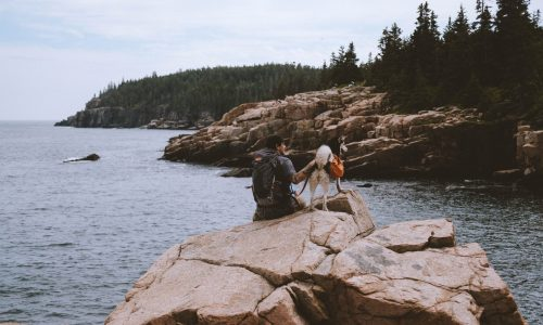 total of man and his dog sitting on the rock in the wild nature