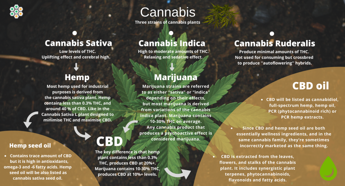 graphic show the cbd oil origins from the cannabis plant